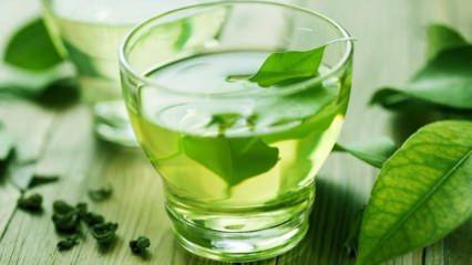 Yağ yakan yeşil çay kürü