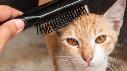 Kedi ve köpek tüyü nasıl temizlenir?