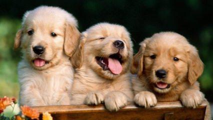 Rüyada köpek görmek ne anlama gelir? Rüyada köpek görmenin tabiri…