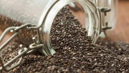 Chia tohumu nedir? Chia tohumu faydaları