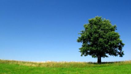 Rüyada ağaç kesmek ne anlama gelir? Rüyada ağaç kesmenin tabiri nedir?