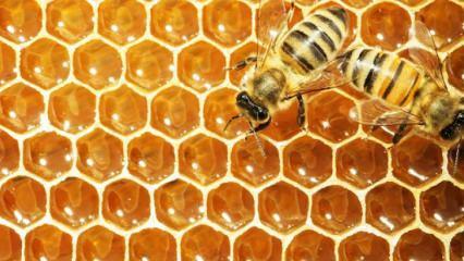 Rüyada arı görmek nasıl yorumlanır? Rüyada arı görmenin detaylı tabiri
