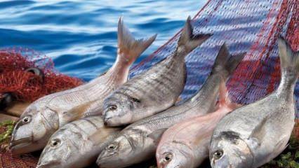 Balık seçerken nelere dikkat edilmeli?
