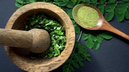 Moringa çayı zayıflatır mı? Moringa çayının faydaları...