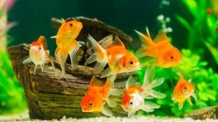 Rüyada balık görmek nasıl yorumlanır? Rüyada balık görmenin tabiri...