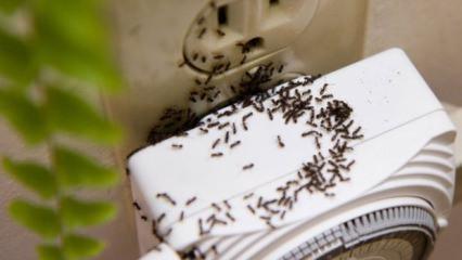 Evdeki karınca sürüsünden kurtulmanın yolları! Önlemenin yöntemleri...