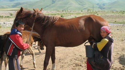 At sütü nedir ve faydaları nelerdir?