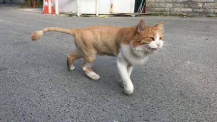 Oktar'ın 'aslan' kedisi sokakta kaldı