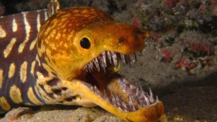 Denizde bulunan en korkunç canlılar