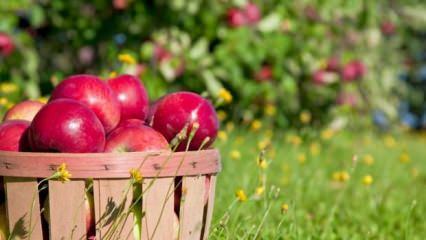 Elmayı taze tutmanın püf noktaları