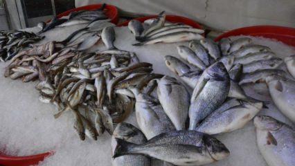 Ekim ayı hangi balıklar tüketilmeli ve faydaları neler?