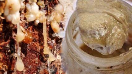 Sığla yağının cilde faydaları nelerdir? Sığla yağı cilde nasıl sürülür?