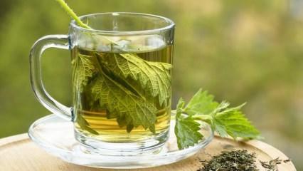 Isırgan otunun faydaları nelerdir? Isırgan otu çayı nasıl yapılır?