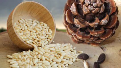 Çam fıstığının besin değerleri nedir? Çam fıstığının faydaları nelerdir?