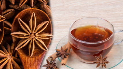Anason tohumunun faydaları nelerdir? Anason çayı nasıl yapılır ve ne işe yarar?