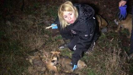 Ormana bırakılan 9 köpek yavrusu soğuktan dondu