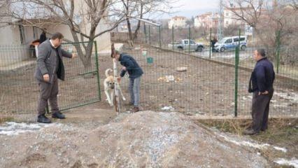 Öğrencinin öldüğü ilçede bir evden 20 köpek çıktı!