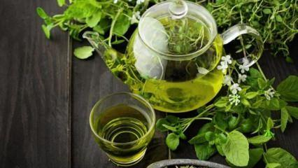Yeşil çay içerek nasıl zayıflanır?