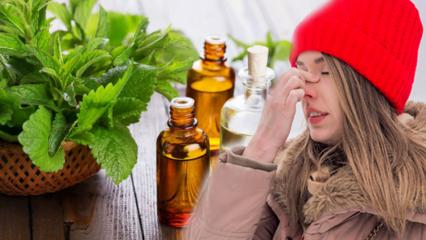 Akciğeri temizleyen bitkiler nelerdir Okaliptüs faydaları nelerdir