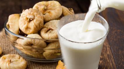 Sütün içine incir atıp tüketirseniz ne olur? Kış hastalıklarına doğal şifa...