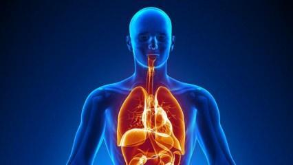 Hangi iç organlar olmadan da yaşanır? Safra kesesi olmazsa ne olur?