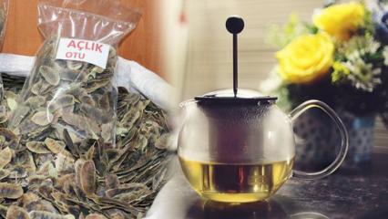 Açlık otu zayıflatır mı? Açlık otu çayı nasıl kullanılmalı?