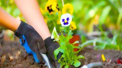 Çiçeklerin canlanması için ne yapılmalı?