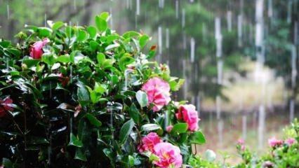 Nisan yağmuru şifalı mı? Nisan yağmuru ne zaman toplanmalı?