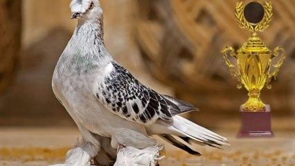 Bir ev değerindeki kuşun fiyatı dudak uçuklattı!