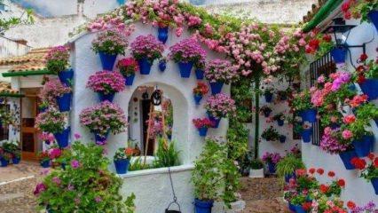 İzmir Bayındır çiçek festivali turuna nasıl gidilir?