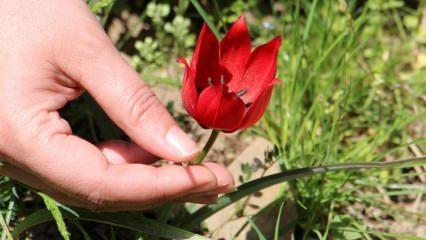 Bu çiçeği koparmanın bedeli dudak uçuklatıyor! Sıfır araba parası!