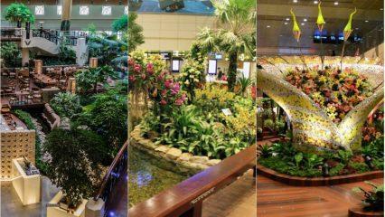 Singapur changi: Dünyanın en iyi havalimanı