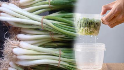 Yeşil soğanın faydaları nedir? Yeşil soğan hangi hastalıklara iyi gelir?