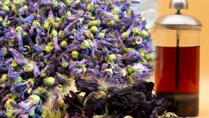 Hatmi çiçeğinin faydaları nelerdir? Hatmi çayı nasıl yapılır?