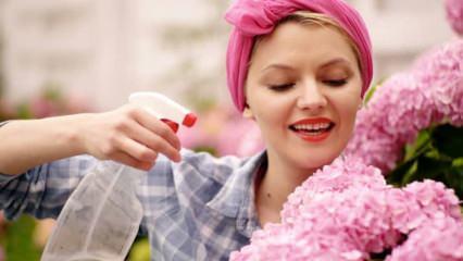 Çiçeklerin hasta olması nasıl önlenir? Hasta çiçekler için ne yapılır?