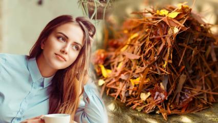 Rooibos çayı ile nasıl zayıflanır? Rooibos çayı ile hızlı kilo verme yöntemi