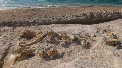 Kayseri'de bulundu! 7,5 milyon yıllık...