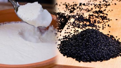 Çörek otu ve yoğurt ile nasıl zayıflanır? Çörek otunu yoğurtla yerseniz...