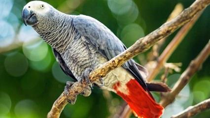 Jako papağanına nasıl bakılır? Nasıl beslenir? Nasıl eğitilir?