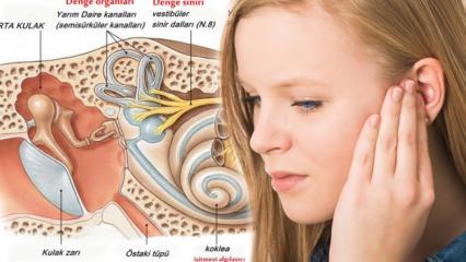 Kulak kristali neden oynar? Kulak kristalinin oynamasının belirtileri...
