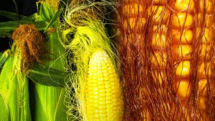 Haşlanmış mısır kilo aldırır mı, kaç kalori? Mısır püskülü çayı ile hızlı zayıflama