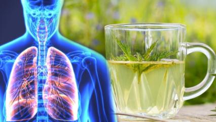 Akciğerleri temizleyen en etkili doğal ilaçlar nedir?