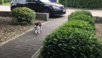 Ninja kedi büyük ilgi gördü