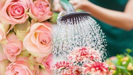 Çiçeklere çok fazla su verildiğinde ne yapılmalıdır?