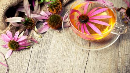 Ekinezyanın (Kirpik otu) faydaları nelerdir? Ekinezya çayı nasıl yapılır?