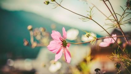 Kışın çiçeklere nasıl bakım yapılmalı? Kış ayı çiçek bakımı