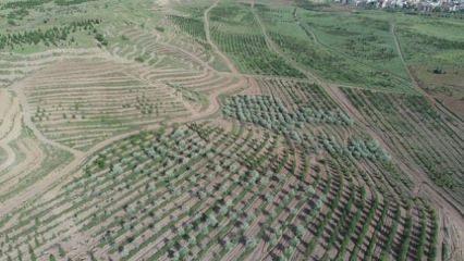 TOKİ'den Atatürk Orman Çiftliği açıklaması!