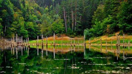 Sülüklü Göl Tabiat Parkı nerede? Nasıl gidilir? Giriş ücretleri