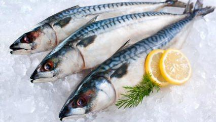 Bayat balık nasıl anlaşılır?