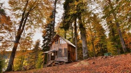 Sonbaharda gidilmesi gereken yerler, Sakarya ve Düzce yaylaları...